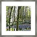 Oregon Forest Framed Print