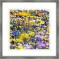 Oregon Wildflowers Framed Print