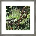 Overgrown Chair Framed Print
