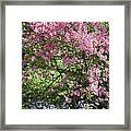 Overgrown Natural Beauty Framed Print