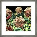 P22 Bacteriophages Framed Print