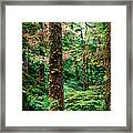 Pacific Rim National Park 14 Framed Print