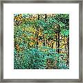 Painted Gold With Sunlight Framed Print