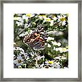 Painted Lady - Surrounded In White Framed Print