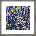 Painted Lady Butterfly On Lavender Flowers Framed Print