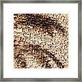 Palm Fragment Framed Print