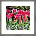 Panel Of Pink Tulips Framed Print
