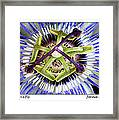 Passion's Fly Framed Print