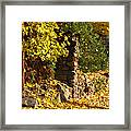 Path Of Yellows Framed Print