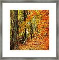 Pathway Through Autumn Woods Framed Print