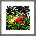 Paute Farm Flowers Framed Print