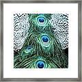 Peacock Plume Framed Print
