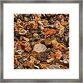 Pebbles And Stones On The Beach Framed Print