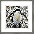 Penguin 14 Framed Print