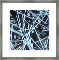 Phytoplankton Framed Print