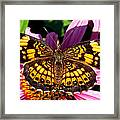 Picture Perfect    Butterfly 003 Framed Print