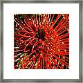 Pincushion Detail Framed Print