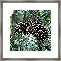 Pine Cone 2 Framed Print