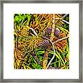 Pine Cones And Needles On A Branch Framed Print