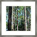Pine Patch Framed Print