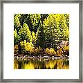 Pine Reflection At Georgetown Lake Colorado Framed Print