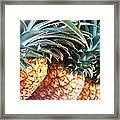 Pineapples Anyone Framed Print