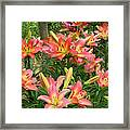 Pink And Yellow Daylilies Framed Print