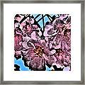 Pink Cherry - Black On Blue Framed Print by Jen White