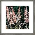 Pink Feathery Reflectors Framed Print
