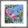 Pink Musk Mallow Framed Print