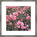Pink Roses Canvas Framed Print