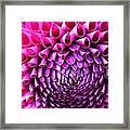 Pink To Purple Dahlia Framed Print