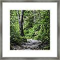 Pisgah Path Framed Print