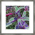 Plasticized Cape Lily Digital Art Framed Print