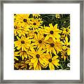 Please Don't Eat The Daisies Framed Print