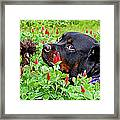Plotting To Take Over The Farm Framed Print