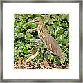 Pond Heron Framed Print