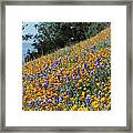 Poppies And Lupine Flowers Blanket Framed Print