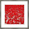 Poppy Meadow ... Framed Print
