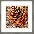 Portrait Of A Pinecone Framed Print
