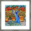 Potted Peacock Framed Print