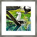 Preening Watercolor Framed Print