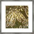 Protozoa, Paramecium, Lm Framed Print