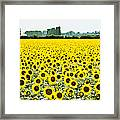 Provencial Sunflowers Framed Print