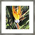 Purple And Orange Flower Accent Fx  Framed Print