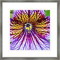 Purple And Yellow Flower Framed Print