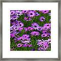 Purple Daisies Square Framed Print