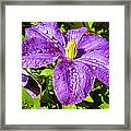 Purple Rain Framed Print by Sergio Aguayo