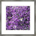 Purple Screen Square Framed Print
