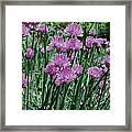 Purple Spikes Framed Print